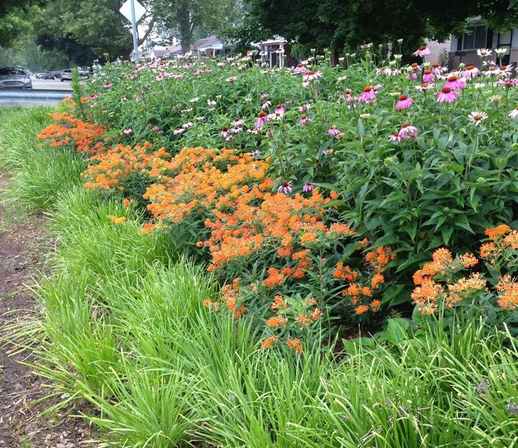 native plant and pollinators workshop garden